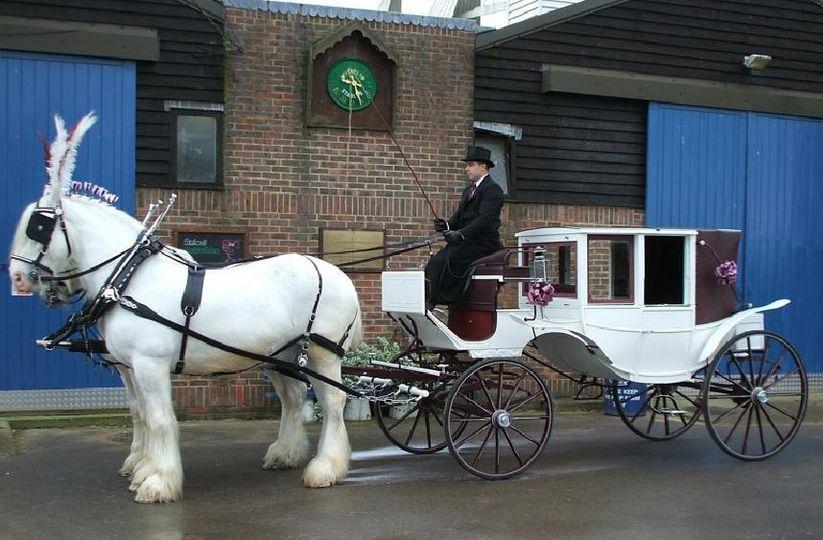 White horses and white carriage