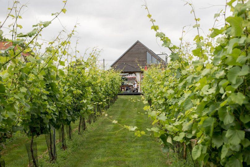 West Street Vineyard 2