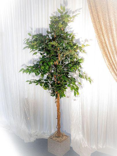 Ficus aisle tree