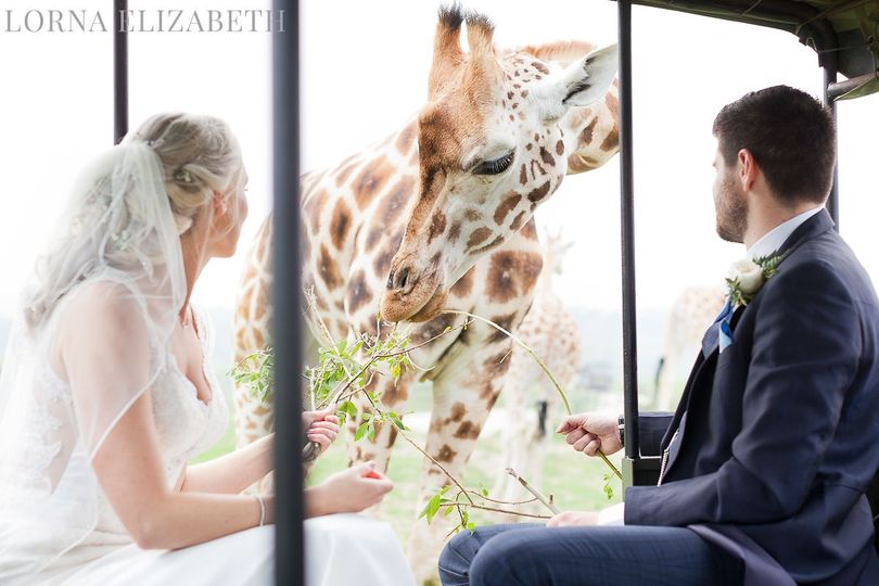 Wildlife wedding