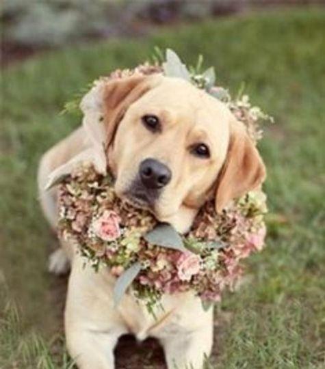 Wedding-day chaperone
