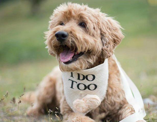 Wedding-themed doggy collar