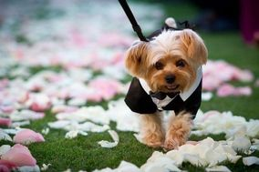Dog Chaperone Service
