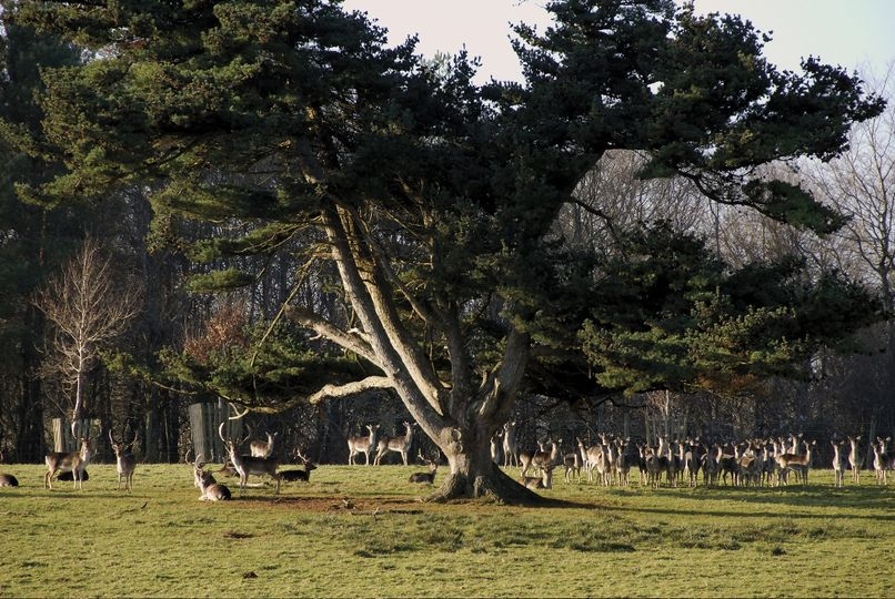 Deer Park at Boconnoc