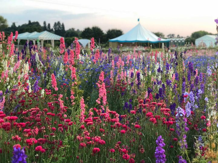 Visit The Confetti Flower Field in late June/early July - The Real Flower Petal Confetti Company