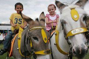 Real Donkeys