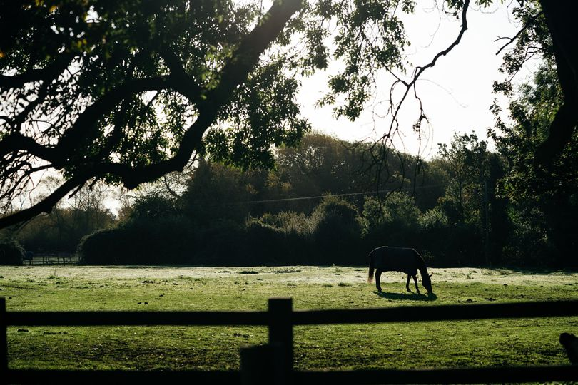 Horse Sanctuary on Grounds