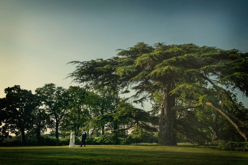 Cedar Oak Tree