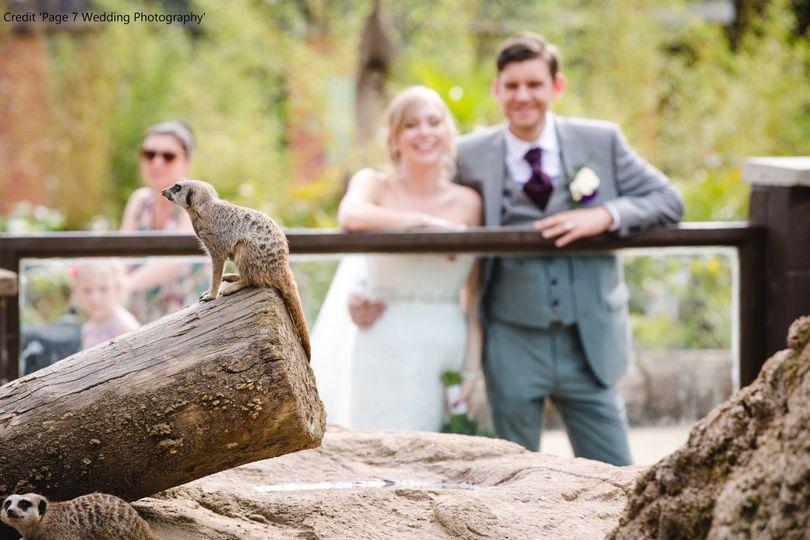 Twycross Zoo Meerkats