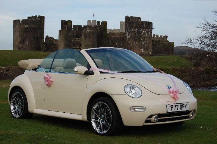 Poppy Bug - 2 cream Bugs Avalible