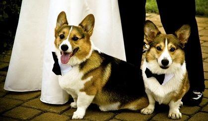 Dapper doggies