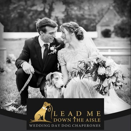 Lead Me Down the Aisle - Newlyweds wow guests with their wedding day dog