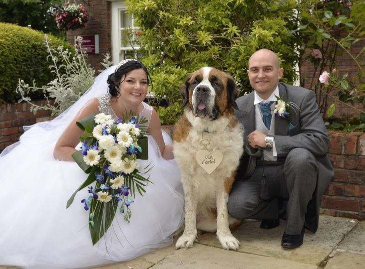 Dog chaperone