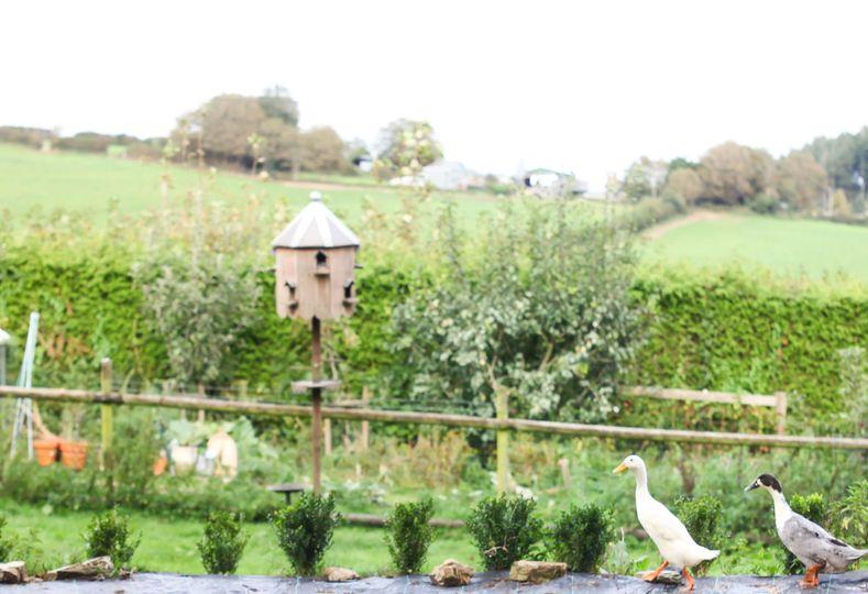 Cornish countryside views