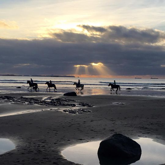 Horses on Druidstone Beach