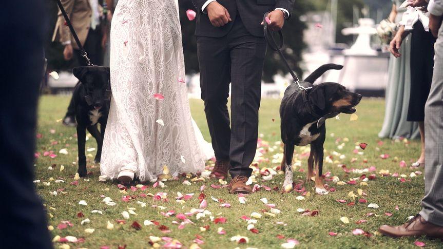 Confetti dog
