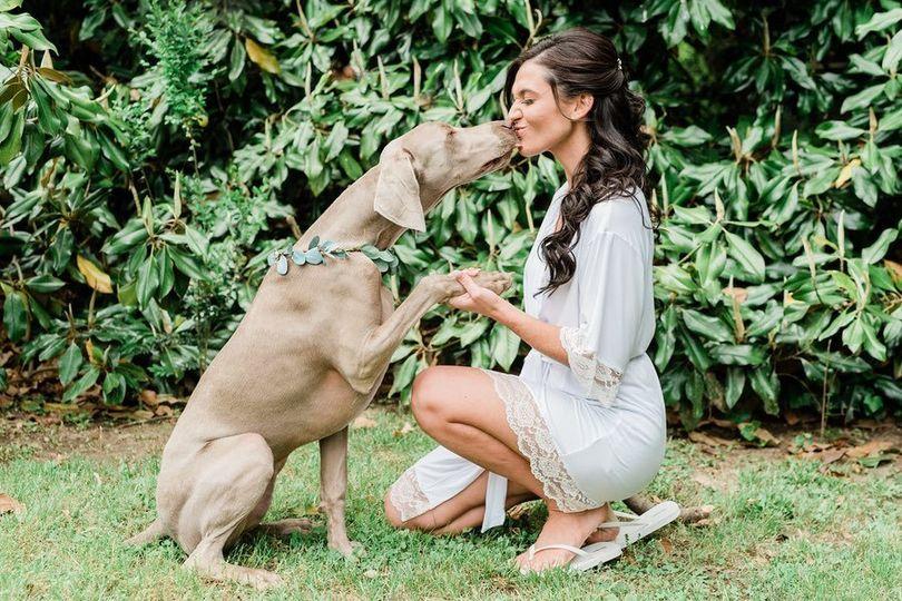 dog at wedding 4 277765 161416820399199