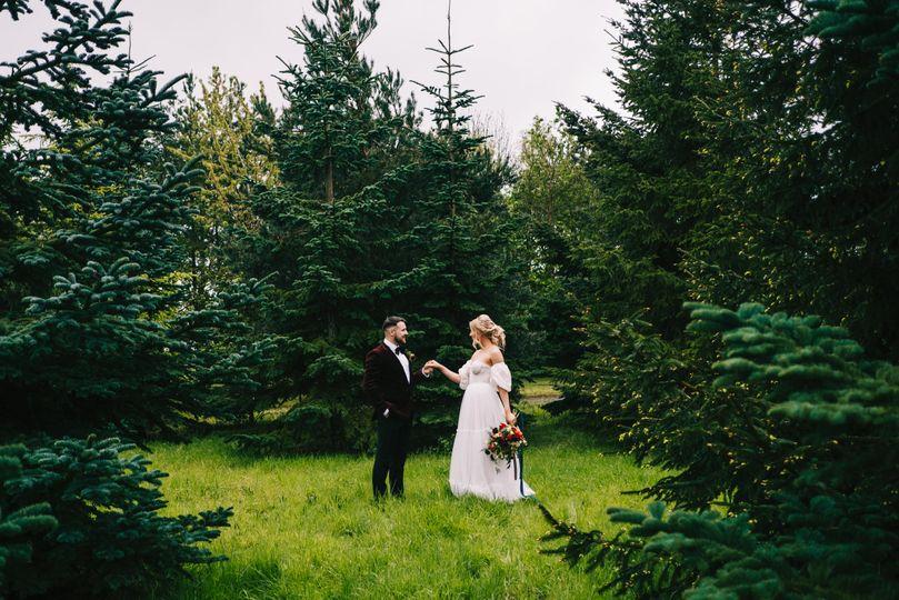 The enchancting woodland