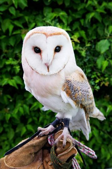 Meet beautiful birds up close