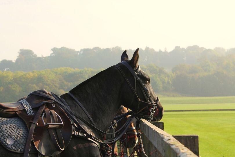 Leadenham Polo Club 16