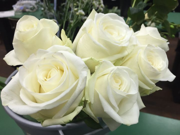 Beautiful Avalanche roses