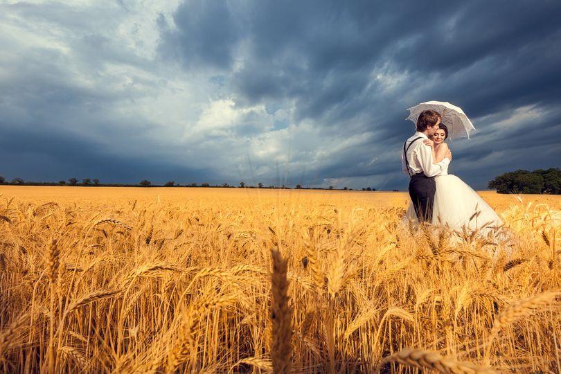 wedding photo in magic wheat field 409026 4 278857 161582322887332