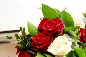 Blossom Baby Ltd