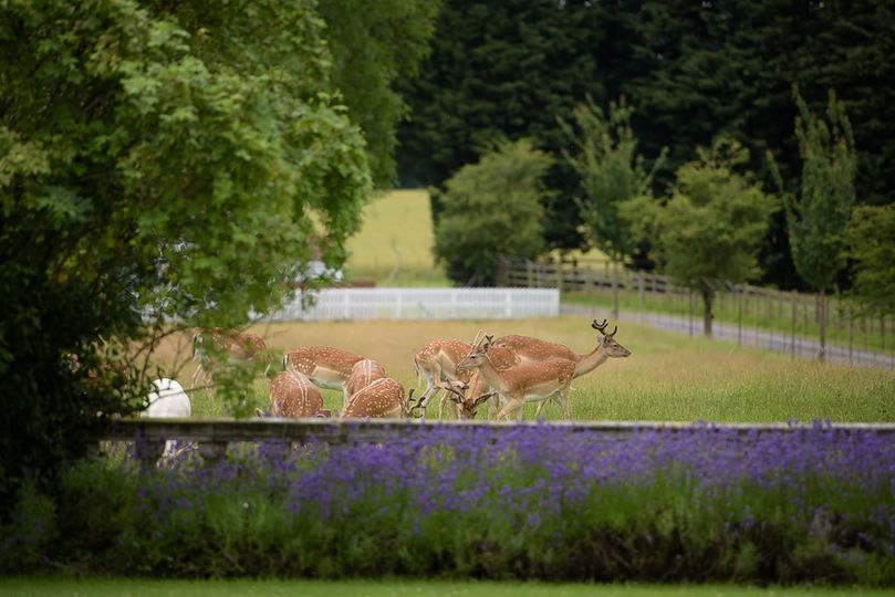 100 Acre Deer Park
