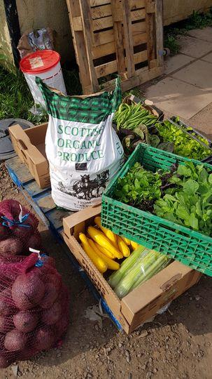 Fresh local organic veg