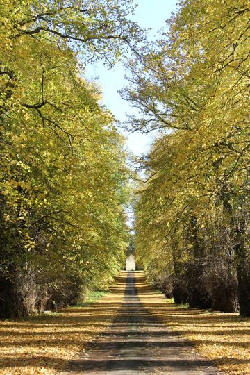 Duns Castle - Avenue of Lime Trees