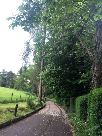 Woodbank 12