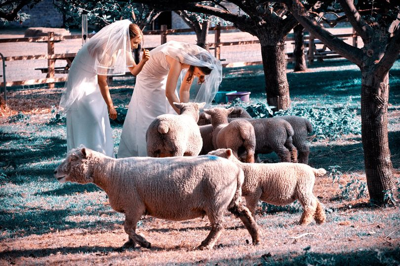 Civil partnership wedding