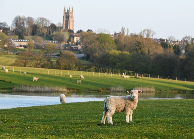 Our setting & Lambs