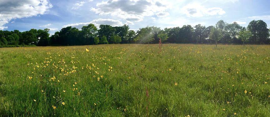 Meadow (venue)