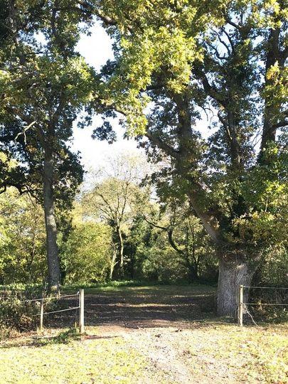 Bow Hayes Farm 13
