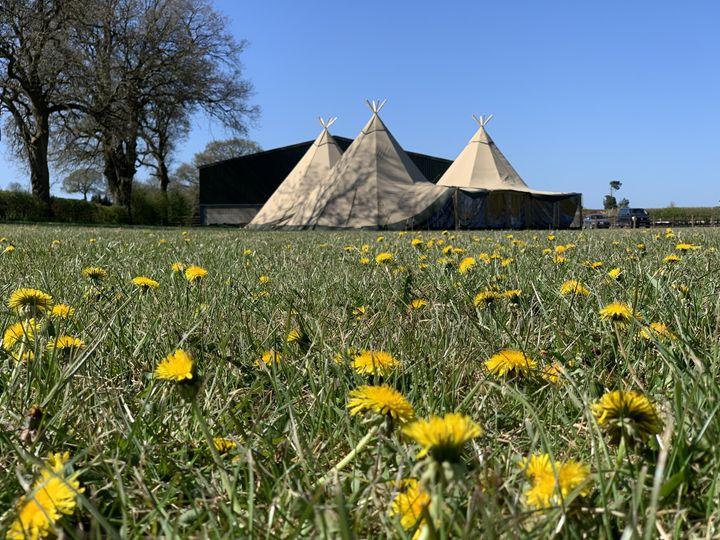 Dandelions in the tipi field