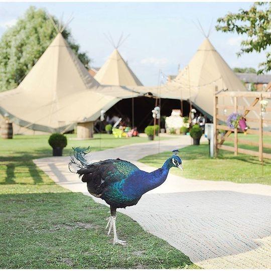 Skipbridge Country Weddings 22