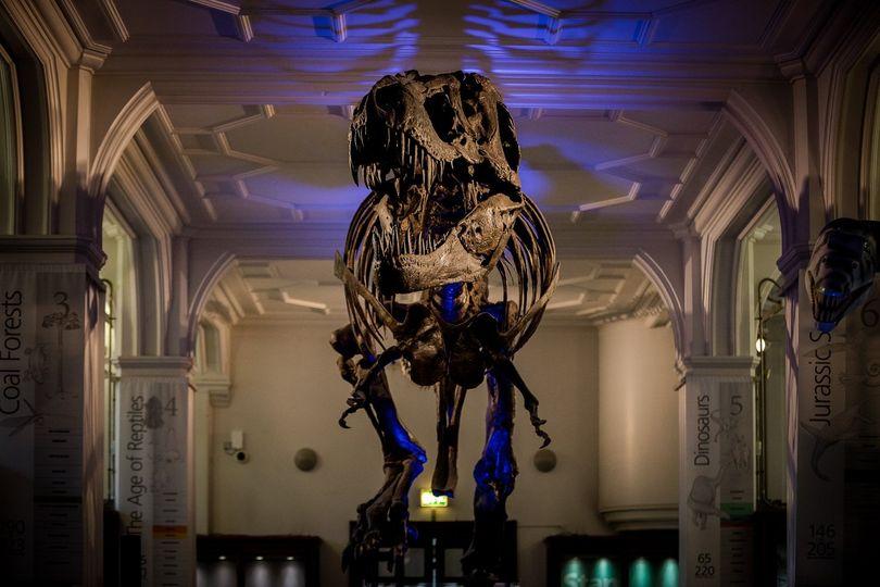 Stan the T-Rex skeleton