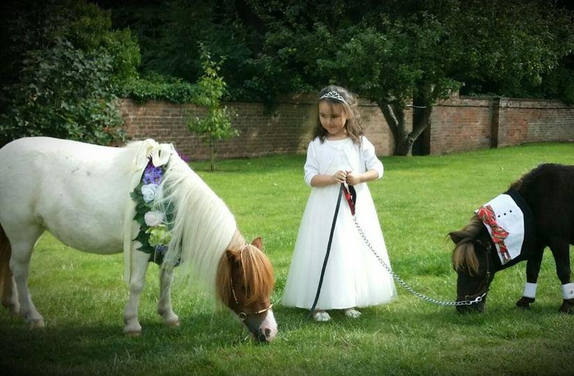 twinkletoes ponies 001 4 109918