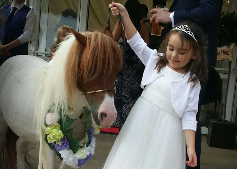 twinkletoes ponies 003 4 109918
