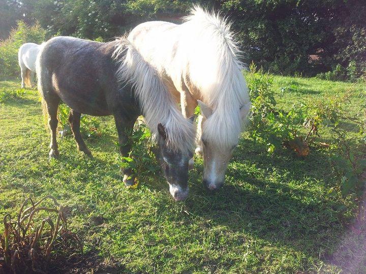 twinkletoes ponies 006 4 109918