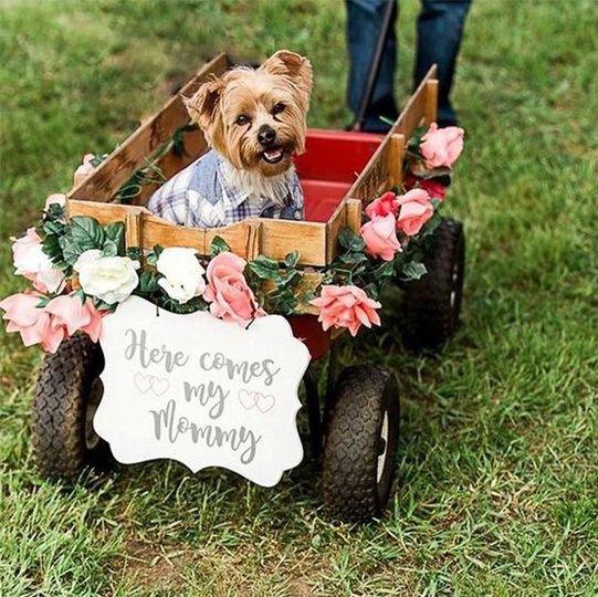 Dog in a kart