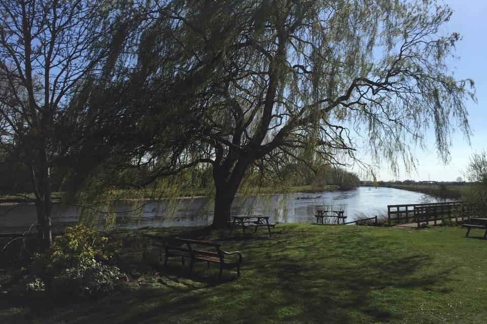 Riverside willow