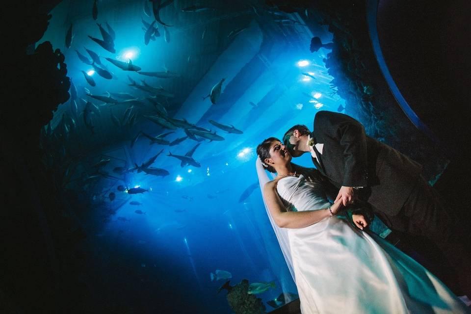 Aquatic kiss