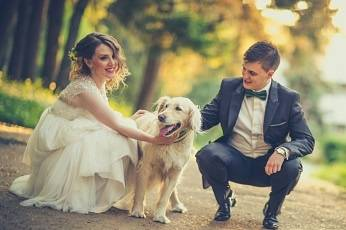 Lead Me Down The Aisle - Wedding Day Dogs