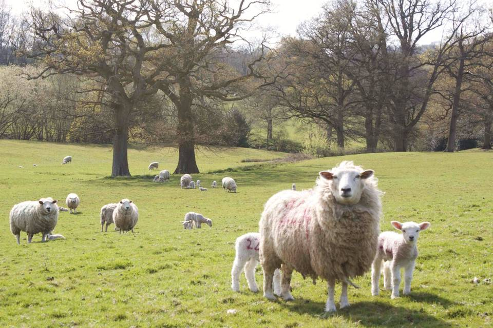 22 acres of sheep fields