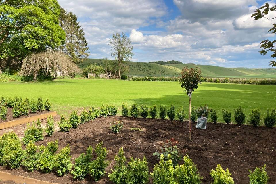 Newly planted rose garden