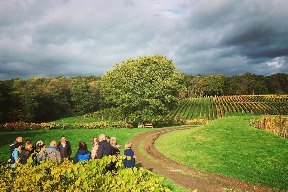 Great British Wine Tours