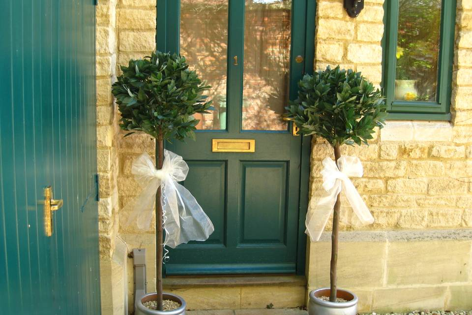 Bay trees for hire